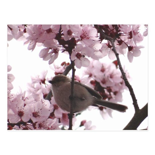 Bushtit in flowers postcard