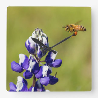 Busy Bee Contemplating a Wild Lupine Flower Square Wall Clock