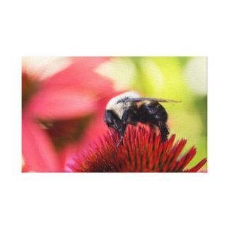 Busy Bee on a Echinacea purpurea Pow Wow Canvas