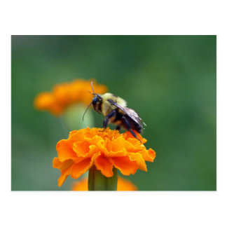 Busy Bee Postcard