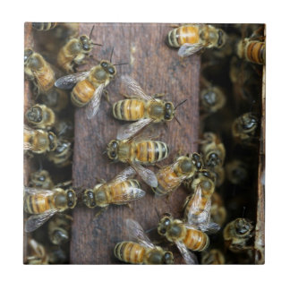 Busy honey bees at the hive tile