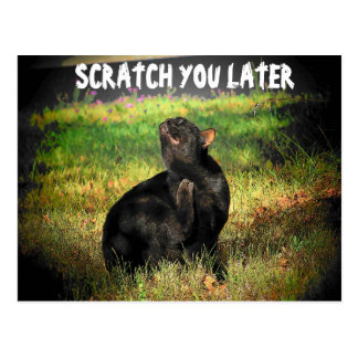 Busy Right Meow? Scratch you later Postcard