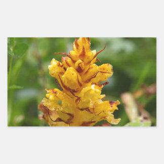Butterbur broom (Orobanche flava)