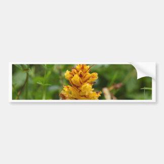Butterbur broom (Orobanche flava) Bumper Sticker