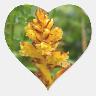 Butterbur broom (Orobanche flava) Heart Sticker