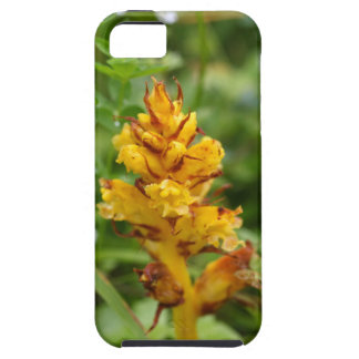 Butterbur broom (Orobanche flava) iPhone 5 Cover