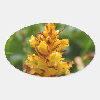 Butterbur broom (Orobanche flava) Oval Sticker