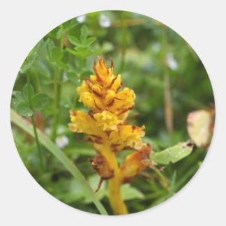 Butterbur broom (Orobanche flava) Round Sticker