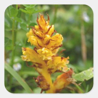 Butterbur broom (Orobanche flava) Square Sticker