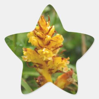 Butterbur broom (Orobanche flava) Star Sticker