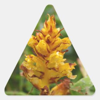 Butterbur broom (Orobanche flava) Triangle Sticker