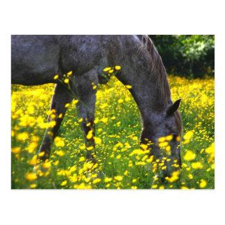 Buttercup Love Postcard