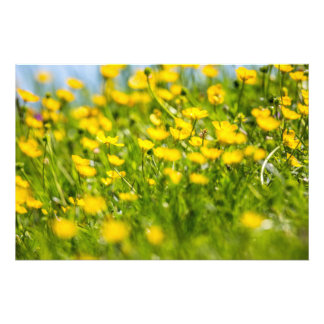 Buttercups in motion photo print
