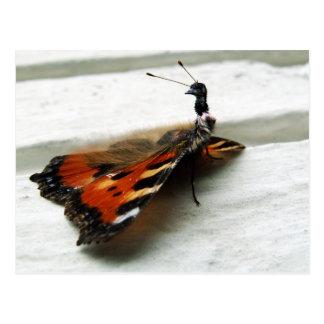 Butteremu Postcard