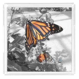 Butterflies Acrylic Tray