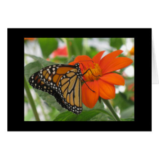 Butterflies are free card