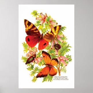 Butterflies & Beetles Poster