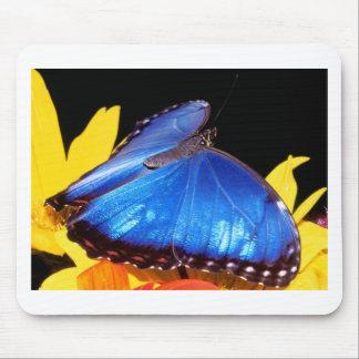 butterflies blue morpho butterfly mouse pad