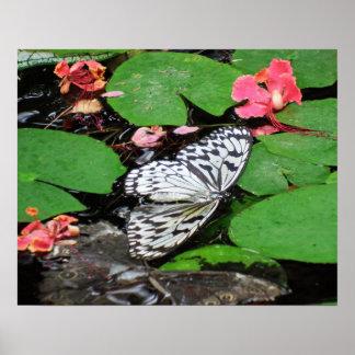 Butterflies Can't Swim Photographic Art Poster
