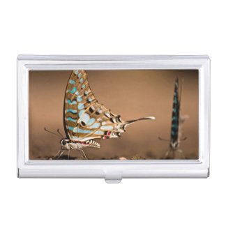 Butterflies Drinking Water, Close-Up, Punda Business Card Holders