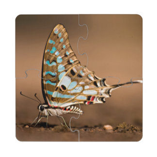 Butterflies Drinking Water, Close-Up, Punda Puzzle Coaster