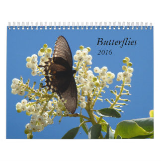 Butterflies for 2016 calendar