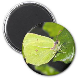 butterflies green leaf 2 inch round magnet
