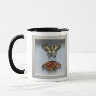 Butterflies 'in a frame' Entomology Mug (white)