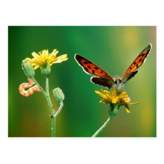 butterflies marvelous metamorphosis postcard