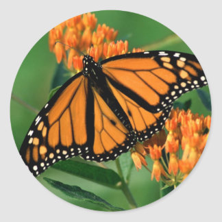 butterflies monarch butterfly round sticker