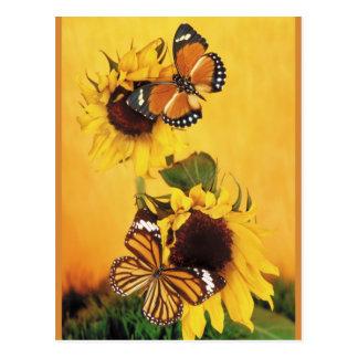 Butterflies of Summer 1 Postcard