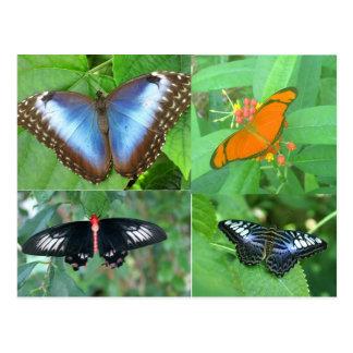 Butterflies of the World Postcard