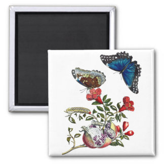 Butterflies on pomegranate square magnet