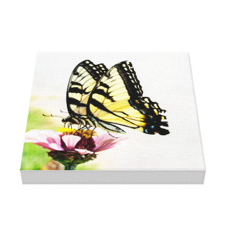 Butterflies Sharing a Flower Canvas