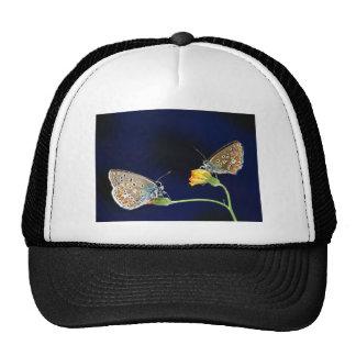 butterflies spring fling mesh hats