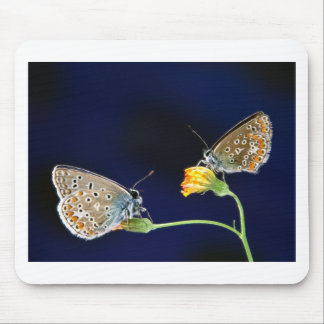 butterflies spring fling mouse pad