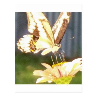 butterfliy love postcard