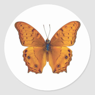 butterfly 03 classic round sticker