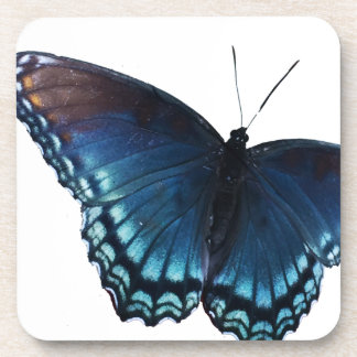 butterfly 16 coaster