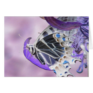 Butterfly altered card