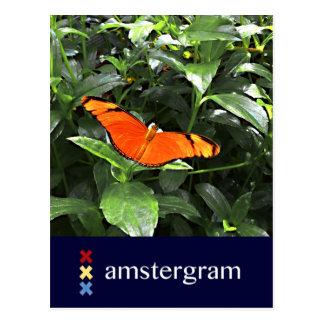Butterfly Amstergram Postcard