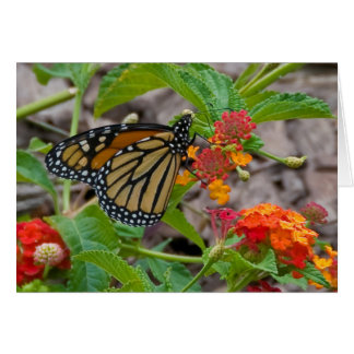 Butterfly and Lantana Card