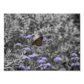 Butterfly and Lavender Photo Print