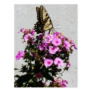 Butterfly and Morning Glories Postcard
