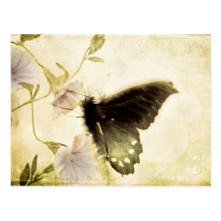 Butterfly and Morning Glory Postcard