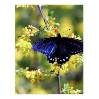 Butterfly and Yellow Flowers Postcard