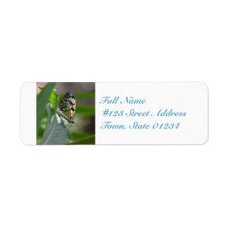 Butterfly Beauty Return Address Label
