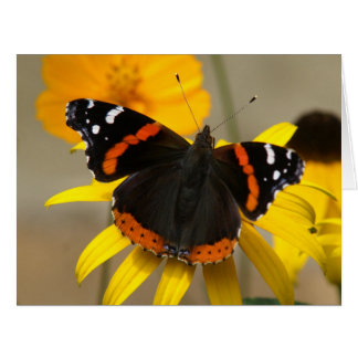Butterfly, Big Greeting Card. Card