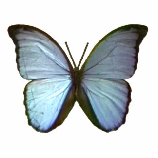 Butterfly Blue Freiburg Germany The MUSEUM Zazzle  Photo Sculpture Ornament