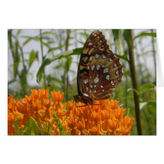 Butterfly Card (Blank on Inside)